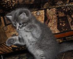 Hyper kitten at work!