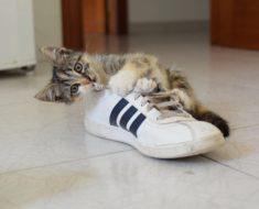 How to stop destructive behavior in cats