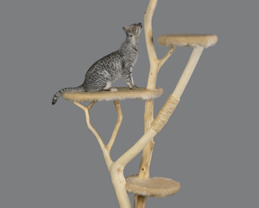 How to Turn a Cat Tree Into The Ultimate Cat Toy