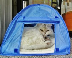 Camping With Kitty Cat Tent Reviews