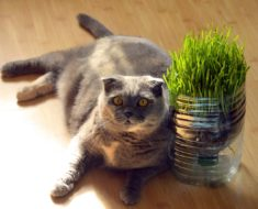 Catnip Doesn't Cut It: Great Catnip Alternatives for Every Kitty