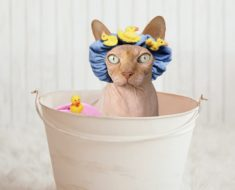 Cleaning Up Kitty: Cat Grooming Supplies for at Home Use