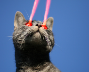 Kitty Phasers Locked: The Top Four Best Laser Pointer Cat Toys