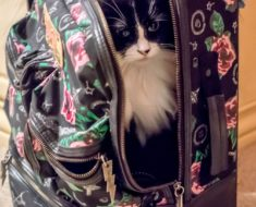 Kitty on the Go Cat Backpacks Review