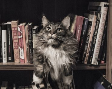 Off the Floor and on the Walls Cat Wall Shelves Reviews