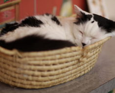 Sleeping in Style: Fancy Cat Beds Review