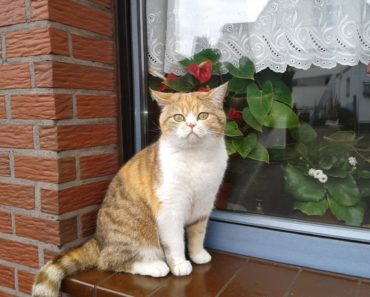 Soaking Up the Sun: Cat Window Perches Reviews