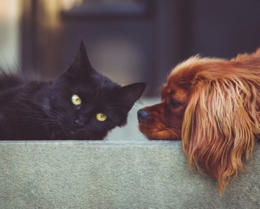 A Full House: The Best Cat-Friendly Dogs for Any Home