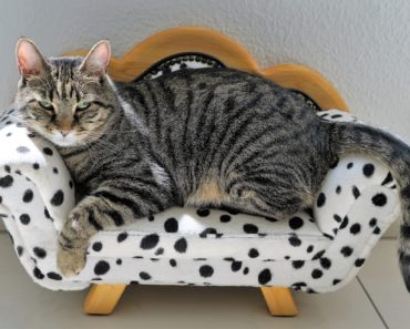 Decorating for Kitty: The Best Cat Furniture on the Market