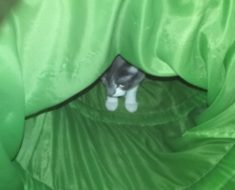 In One Way Out the Other Cat Play Tunnel Reviews