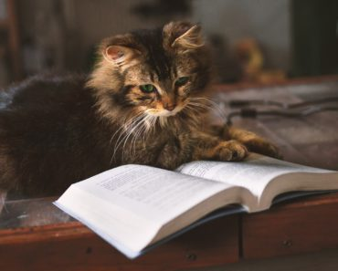 Learning to Cat: A Practical Guide to Kitten Training