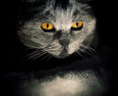Cats in Horror Stories and Why We Love Them