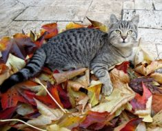 Autumn Cat Puzzle