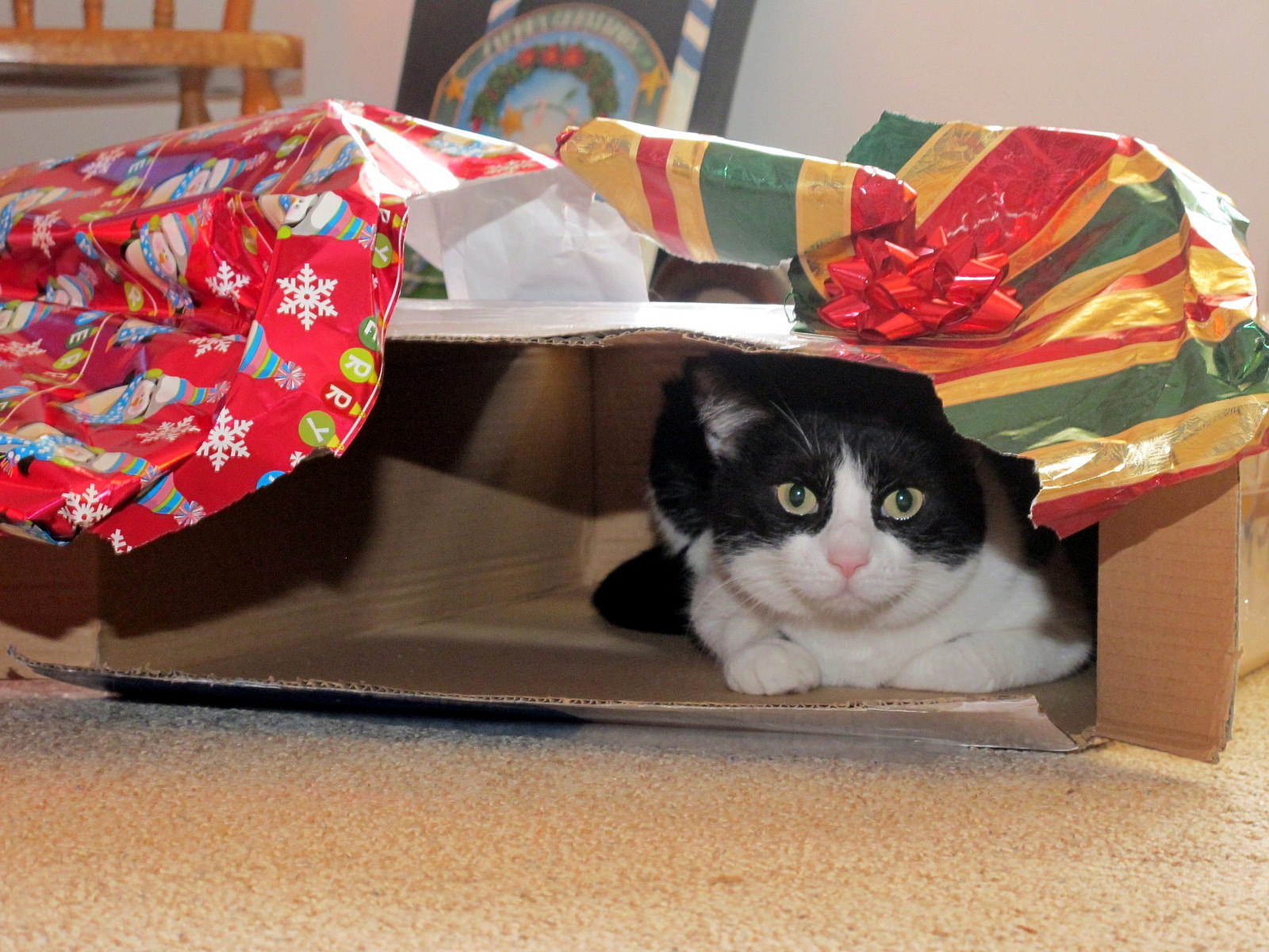Gifts for Cat People Part 1