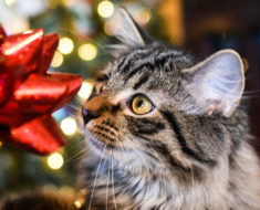 Gifts for Cat People Part 2