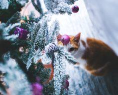 December Cat Puzzle
