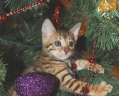 Prettying Up With Kitty: Cat-Safe Decorations for Any Event