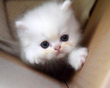 New Kitten Survival Guide