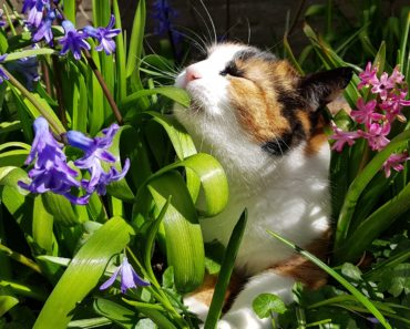 March Cat Jigsaw Puzzle