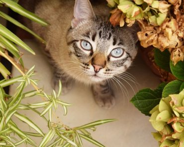 Cavorting With Nature How to Plant a Cat Garden