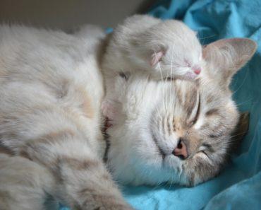Kitty Break: May Jigsaw Cat Puzzle