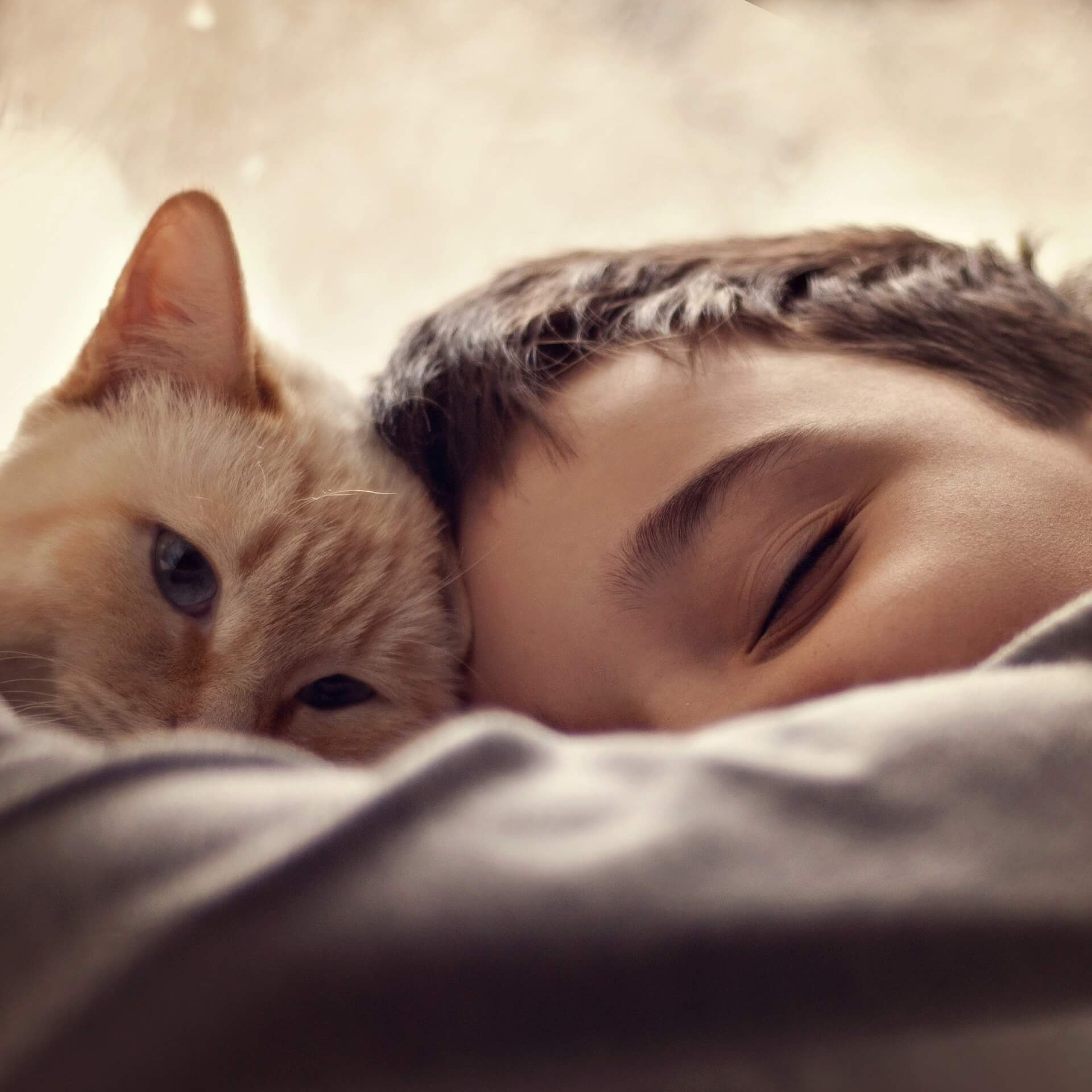 Cats and Kids Five Tips for Fostering Respectful Play - Cats Will Play