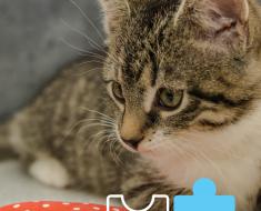 Kitty Break: February 2021 Jigsaw Cat Puzzle