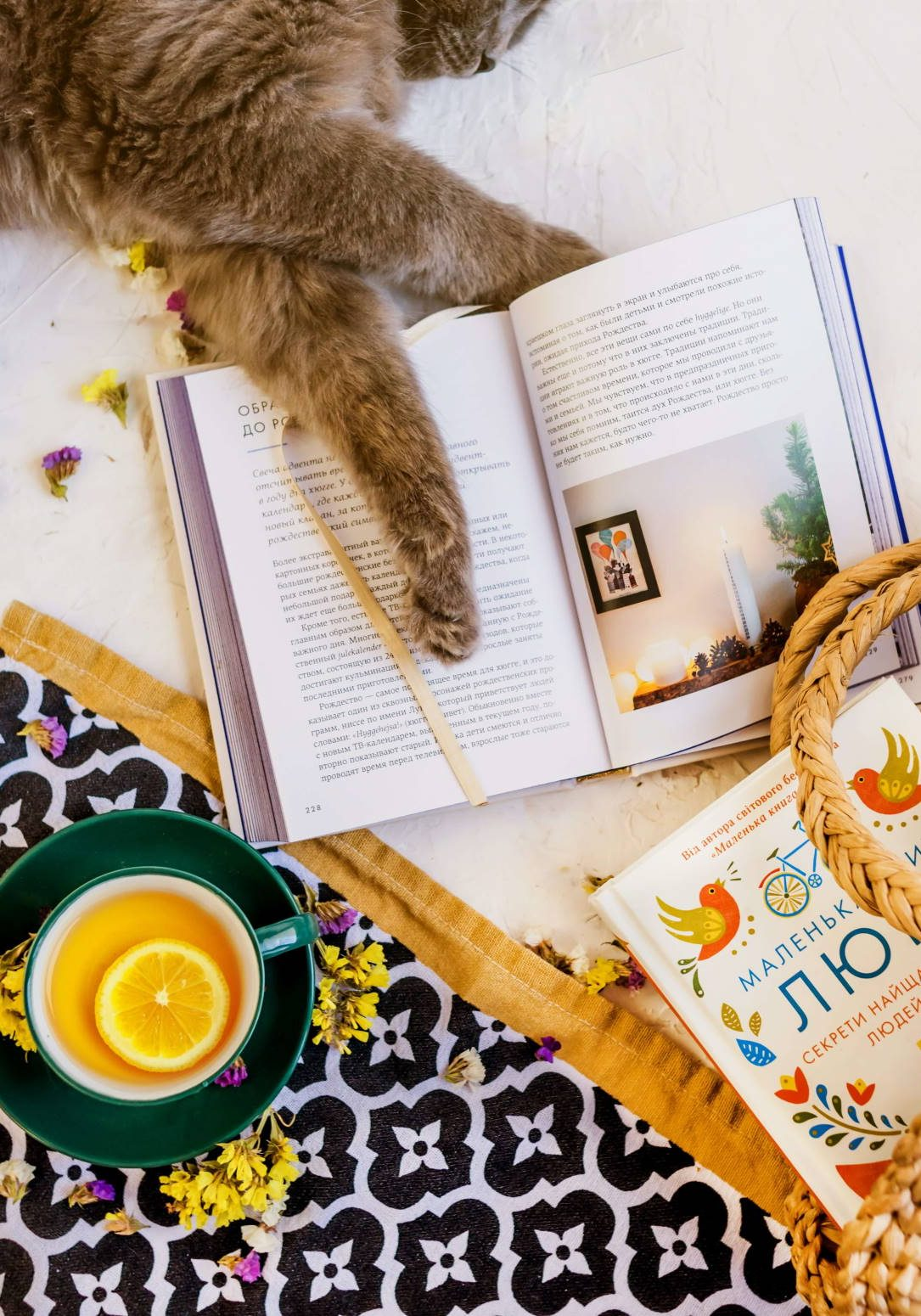1 Cool Books for Brilliant Cat Lovers - Cats Will Play - Image by Євгенія Височина via Unsplash