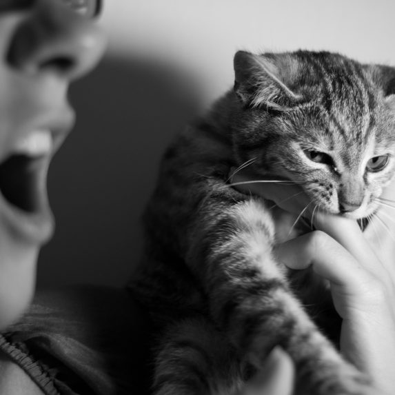 How to Stop Play Aggression in Kittens and Cats  Image by Alberto Bigoni via Unsplash under Unsplash License