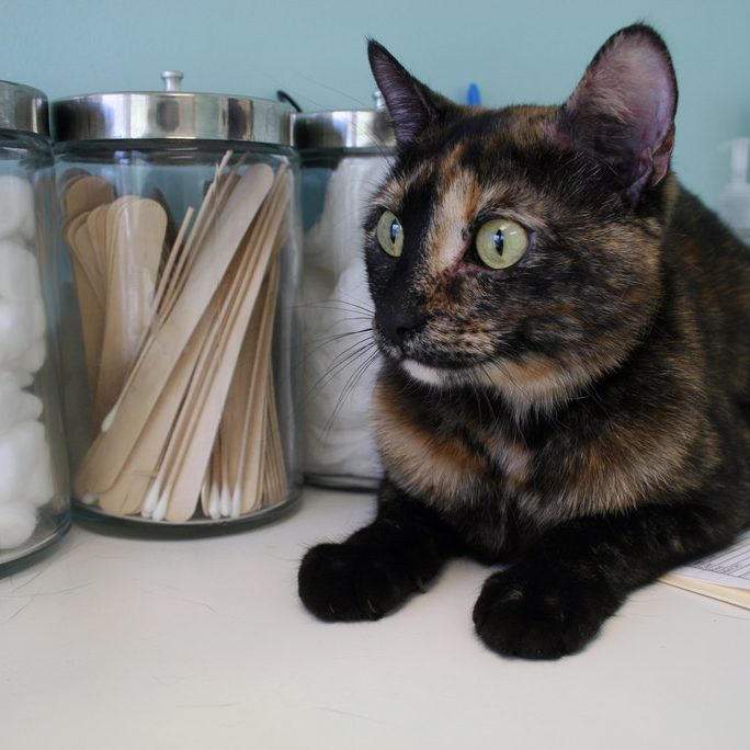 A Day With the Doctor How to Get Your Cat to the Vet With Minimal Stress