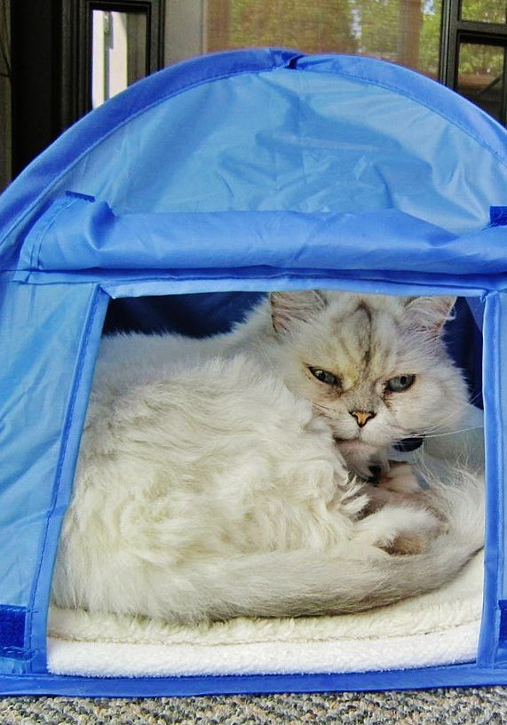 Whether your feline needs a unique indoor hiding place or a safe shelter outdoors, a cat tent will do the trick!  Image by Richard Mc Neil via Wikimedia Commons under Attribution 3.0 Unported (CC BY 3.0)