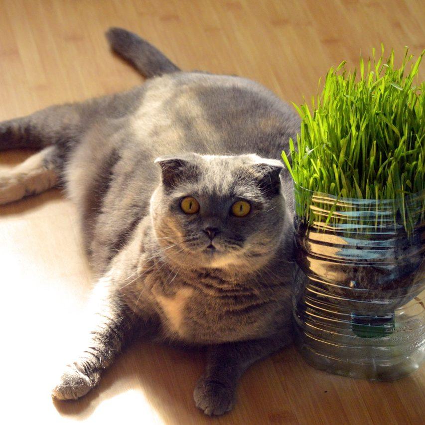 Catnip Doesn't Cut It: Great Catnip Alternatives for Every Kitty