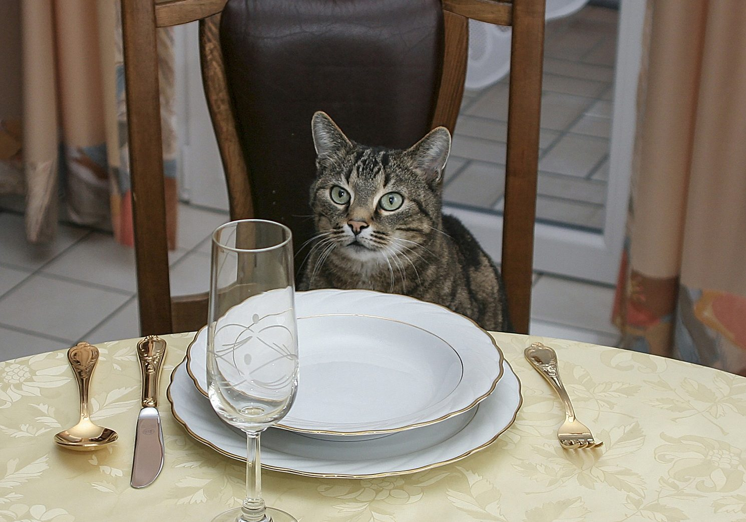 Dining With Domesticus: The Best and Worst Human Foods for Cats