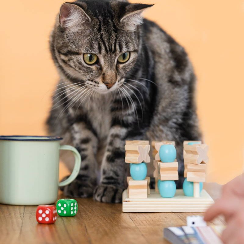 Family Fun Night The Top 5 Cat Board Games for Feline-Loving Households - Cats Will Play - Image by quokkabottles via Unsplash