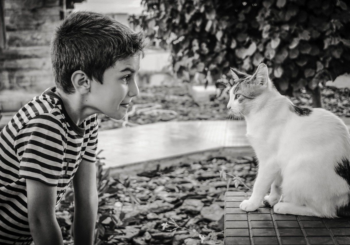 Games Kids and Cats Can Play Together - Cats Will Play - Image by Dimitris Vetsikas
