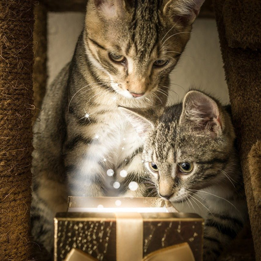 Gifts for Cat Lovers A Helpful Guide - Cats Will Play - Image by Gundula Vogel via Pixabay