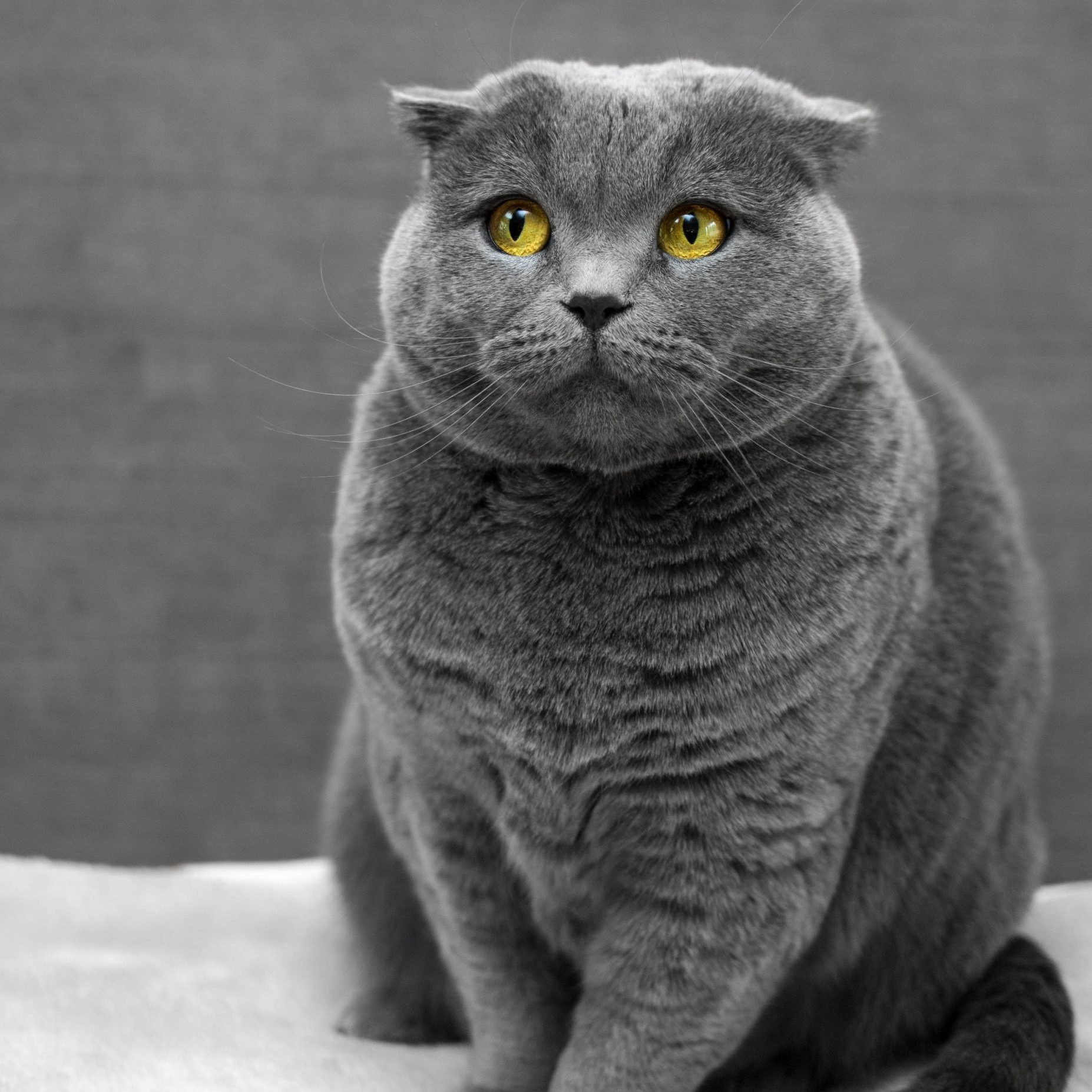 How to Help an Overweight Cat Lose Weight With Play - Image by Max Baskakov - via Unsplash