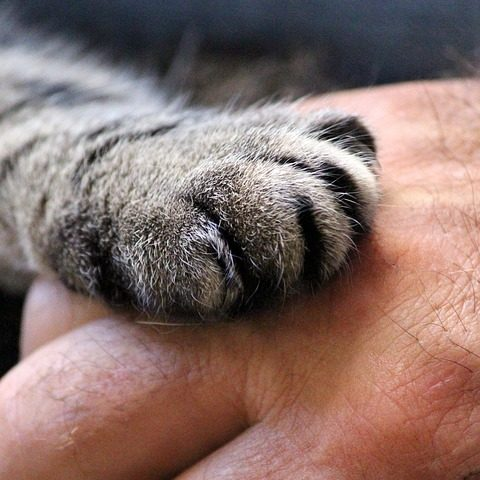 Image by Ulrike Mai via Pixabay under Pixabay License https://pixabay.com/users/counselling-440107/ https://pixabay.com/photos/cat-s-paw-hand-cat-human-trust-1375792/ https://pixabay.com/service/license/