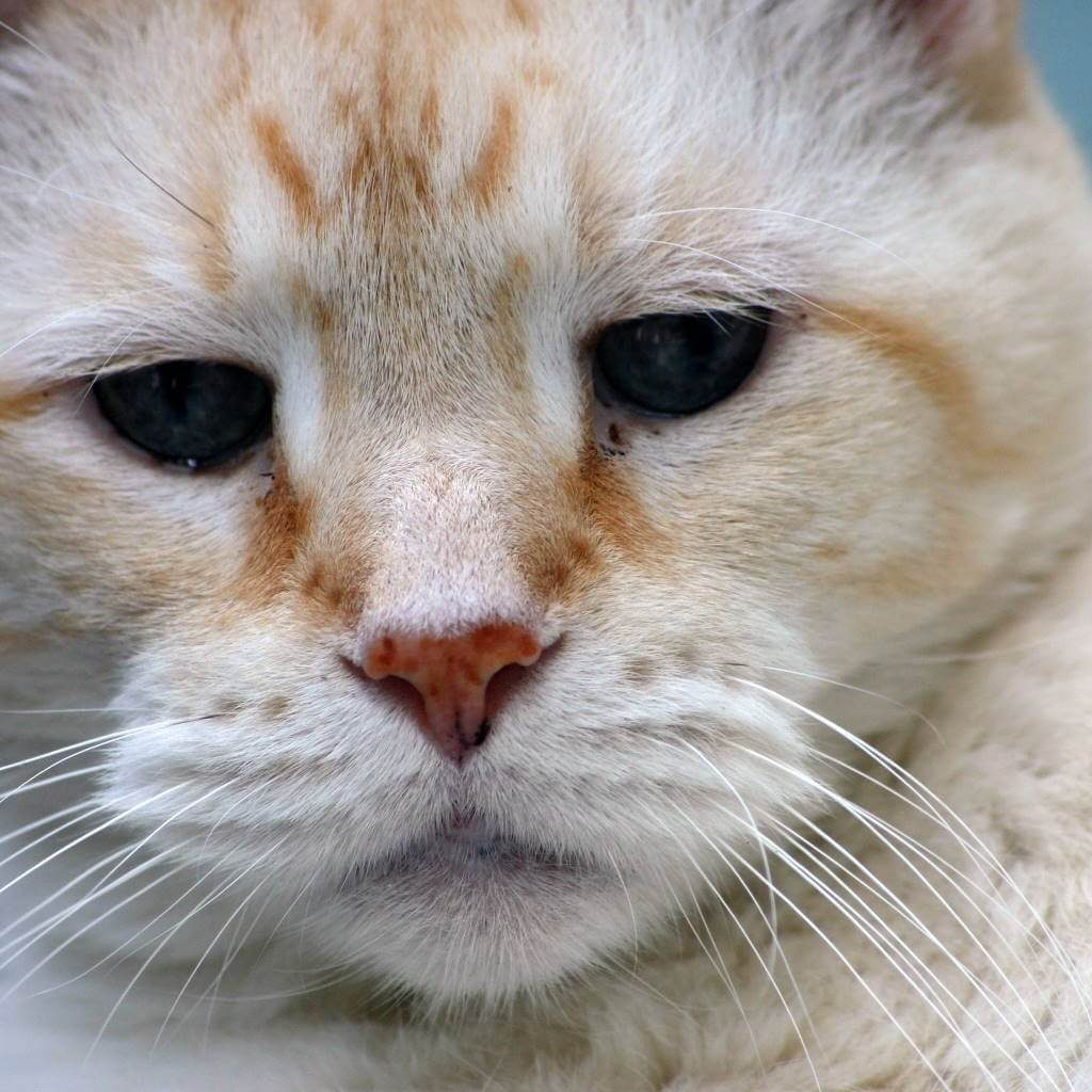 Reasons You'll Be Glad You Adopted a Senior Cat - Cats Will Play