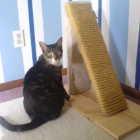 Scratch That: The Best Cat Scratchers for Every Kitty
