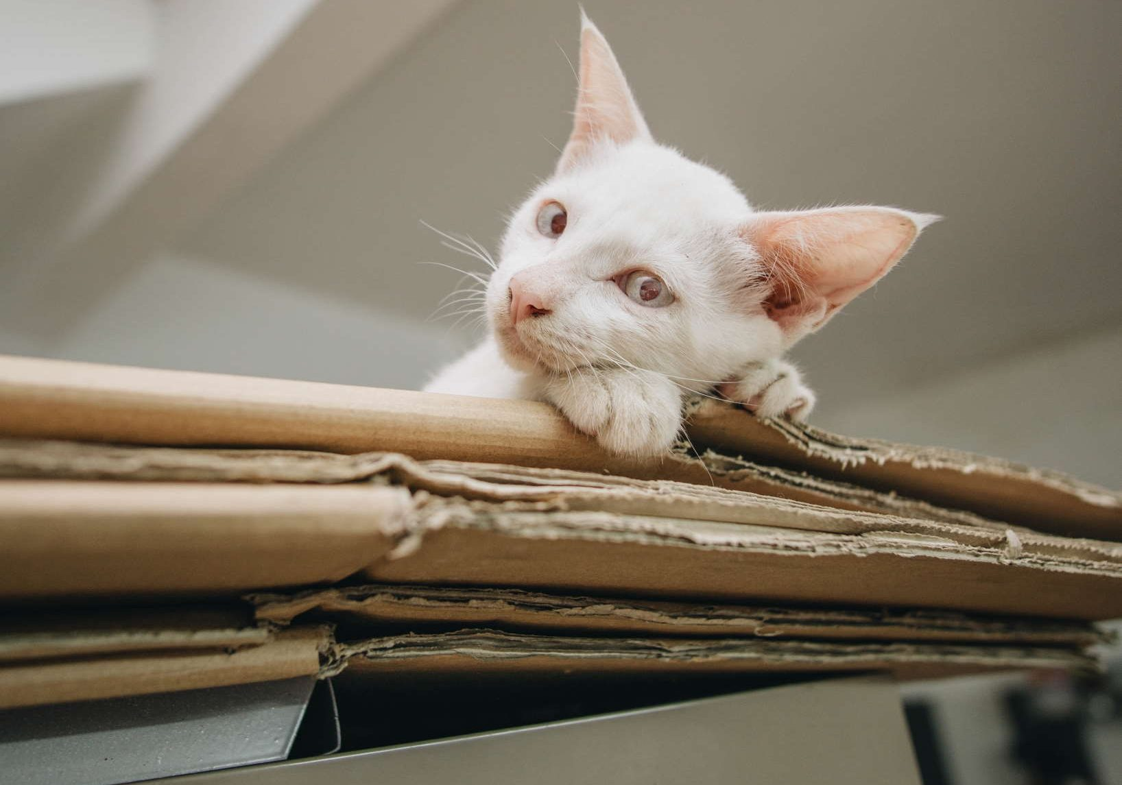 The 6 Best Cardboard Cat Toys and Why Cats Love Them  Image via PxHere under CC0 1.0