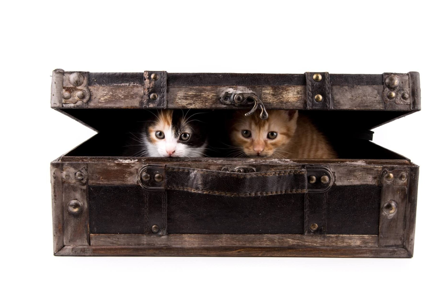 The Cat Toy Box Practical Tips for Toy Storage and Recommendations - Cats Will Play - Twitter