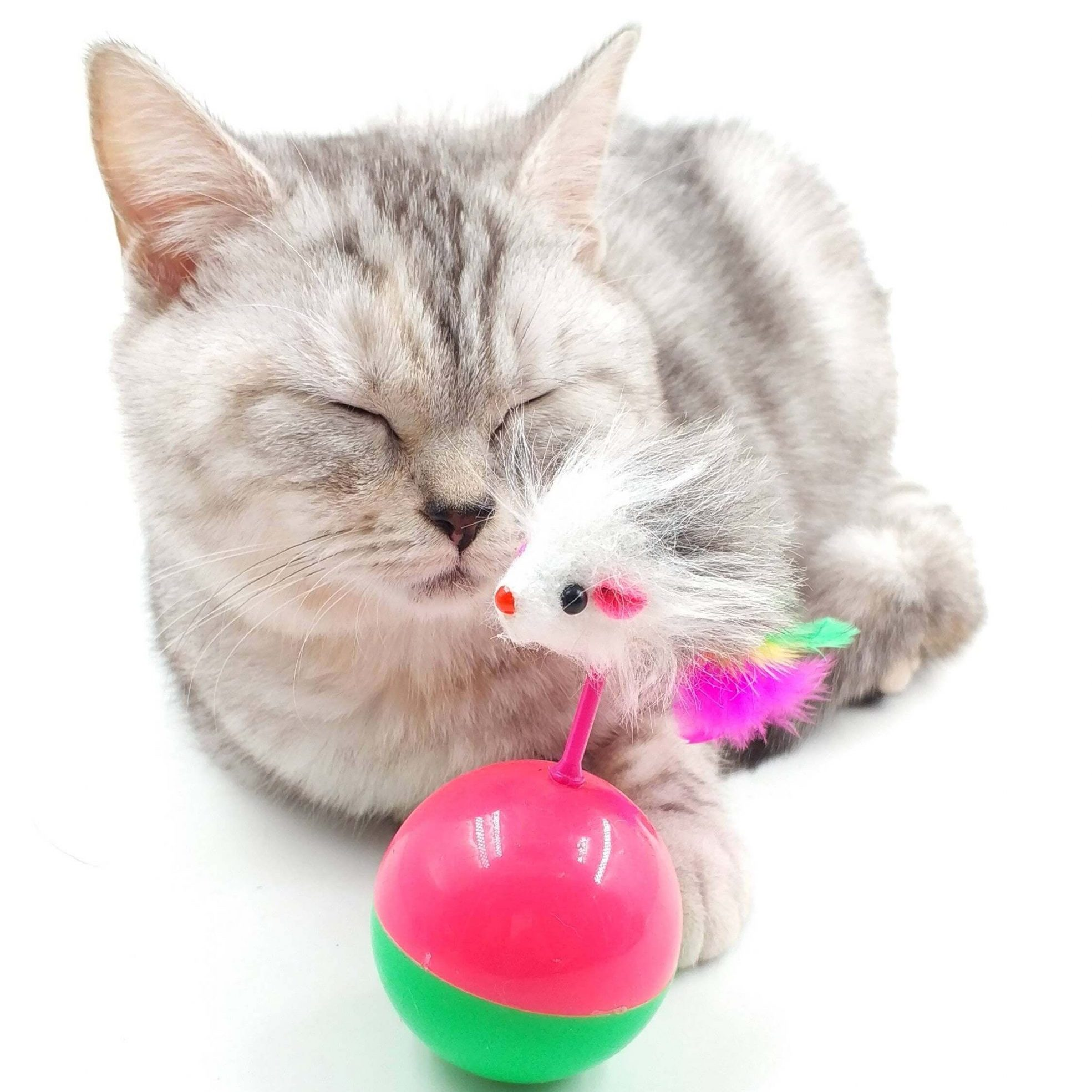 The Top 5 Most Unique Cat Toys on the Market (and Why You Need Them) - Cats Will Play