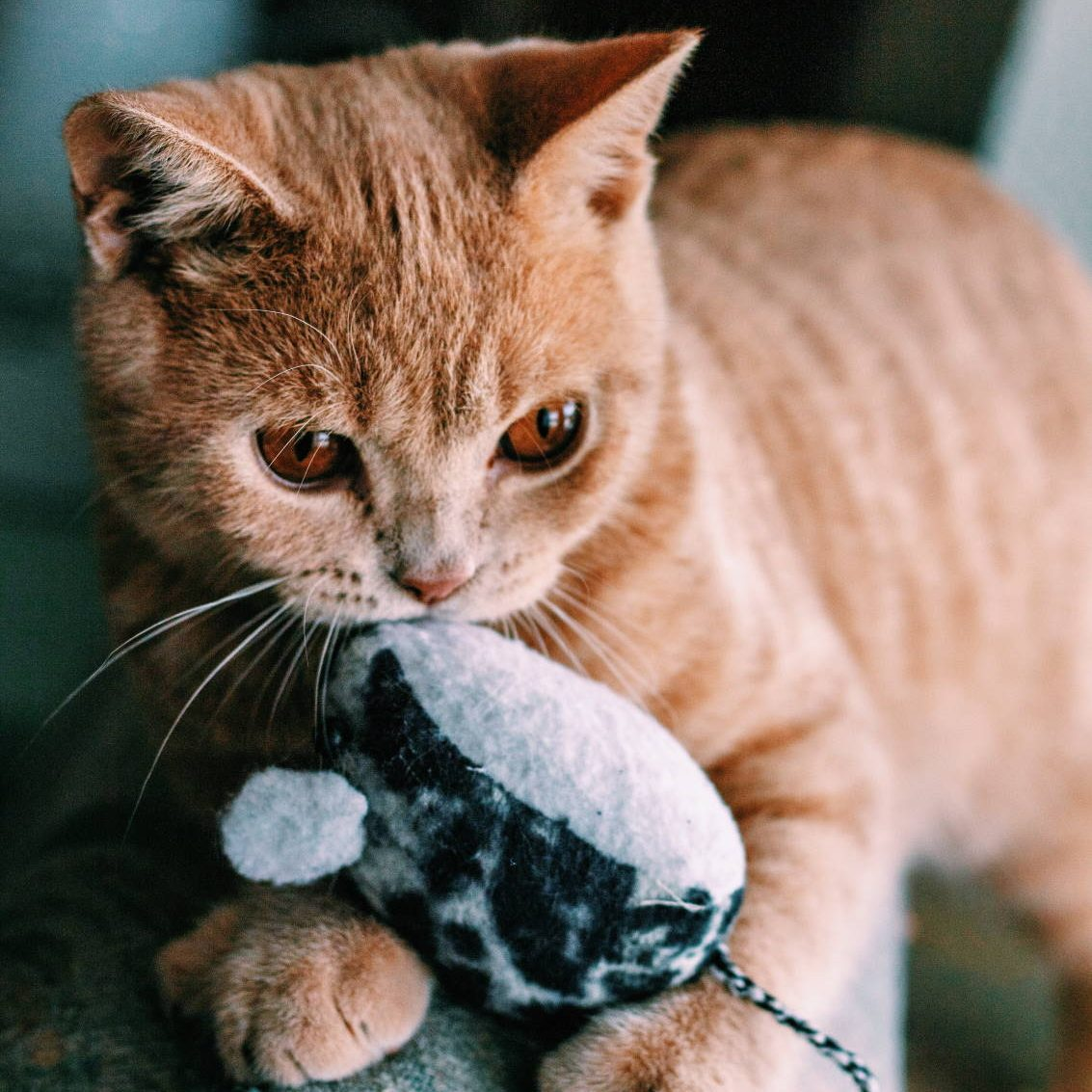 The Top Five Coolest Mouse Toys for Cats - Cats Will Play