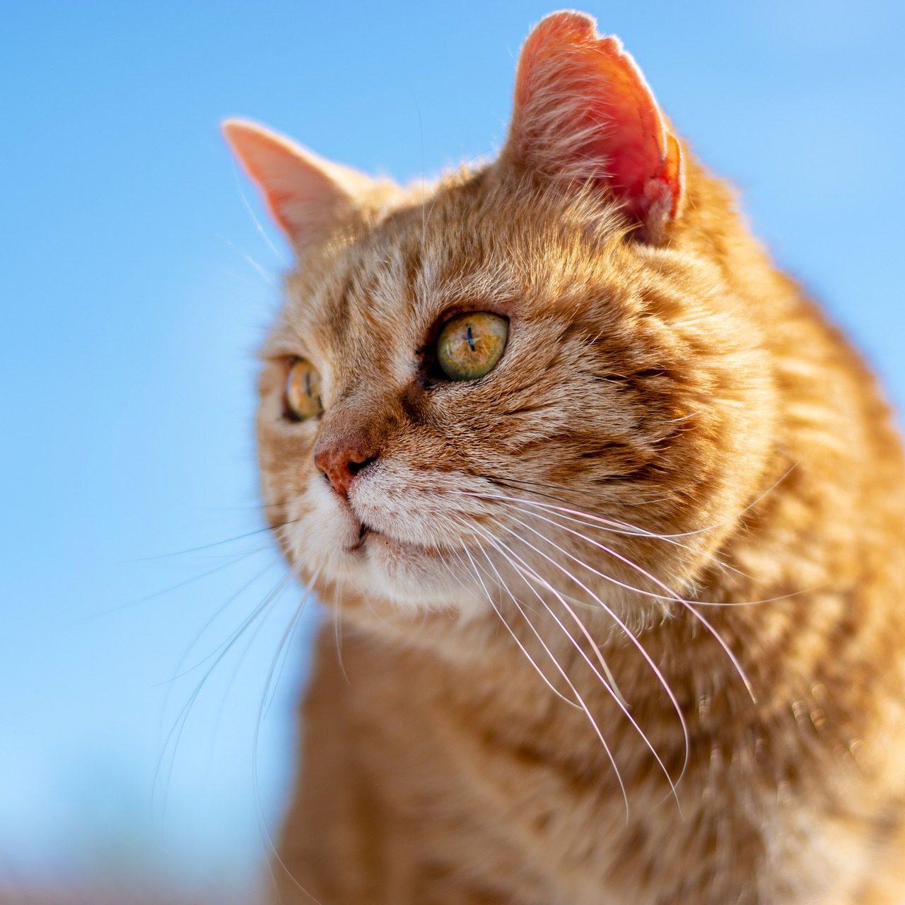 cat-5183427_1920